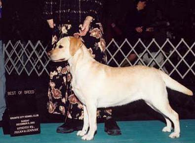 Lucy goes Best of Breed!