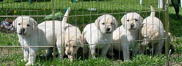 Tori's pups 2002