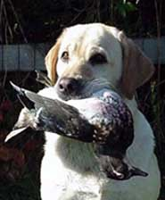 Tori with a wood duck......