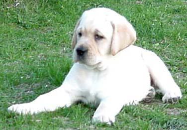 Cute Pupster!!
