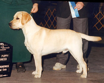 Best of Breed Puppy - New Brunswick KC Show