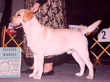 Reserve Winner's Dog